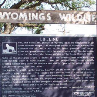 Wyoming Wildlife